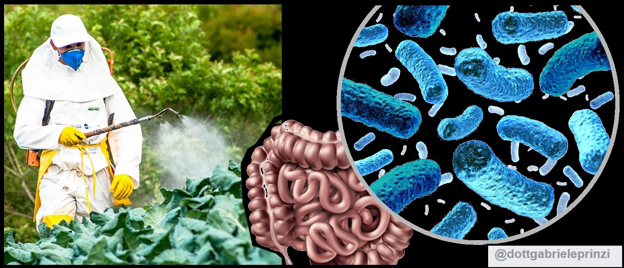 Il Glifosato danneggia seriamente il Microbiota Intestinale.